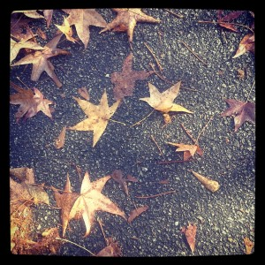 stars as leaves