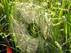 spider web round
